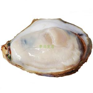 急冻刺身牡蛎-中号  90-150g/只   (12粒装)